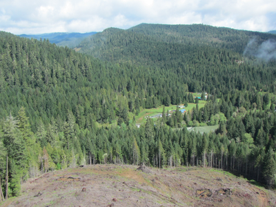 Environmentalists And Timber Industry Reach Agreement On Forests, Avoiding Oregon Ballot Fights - OPB News