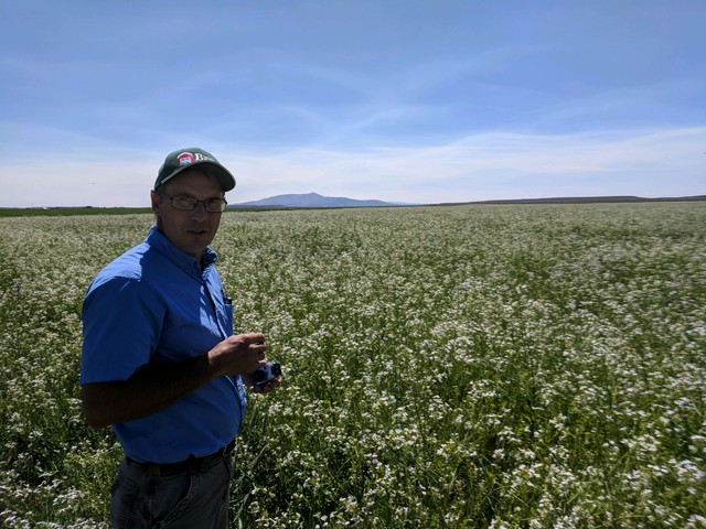 Gary Bishop is a veteran of the U.S. Air Force and now works as a consulting agronomist. Here he's in a blooming field of radish in Deschutes County, Ore.
