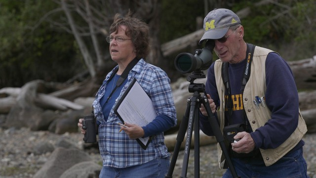 Citizen scientists Sue Ehler and Matt Kerschbaum noticed white pelicans one one of their routine counts of herons on Padilla Bay in Puget Sound.
