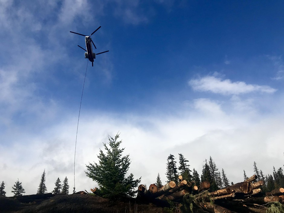 A helicopter is used to fly logs from a staging area to streams that need restoration but are no longer reached by roads. This is the largest stream restoration effort ever in the Northwest.