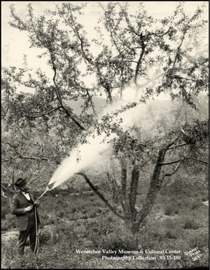 A man in a bow tie sprays an apple tree with lead arsenate. Orchardists say without the pesticide, the country's most productive apple growing region wouldn't have been able to grow apples.