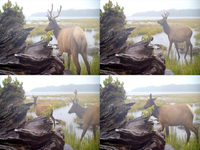 "Artist Malia Jensen's ""Nearer Nature"" project utilized 18 motion-triggered field cameras to gather images of wildlife."