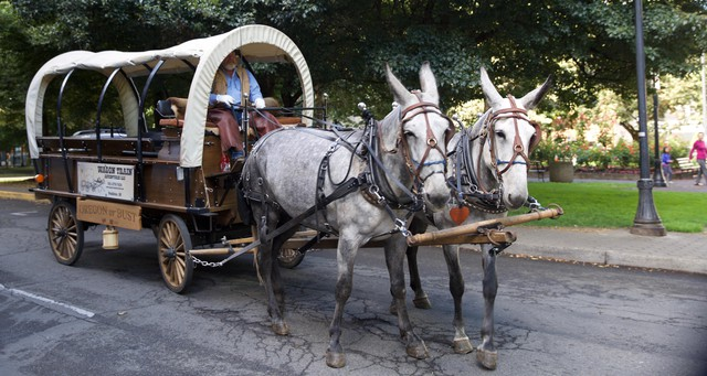 Wagon Train Adventures are in downtown Portland to give free rides and boost tourism.
