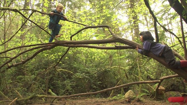 At Cedarsong Nature School kids are not just allowed but encouraged to climb trees, even without shoes.