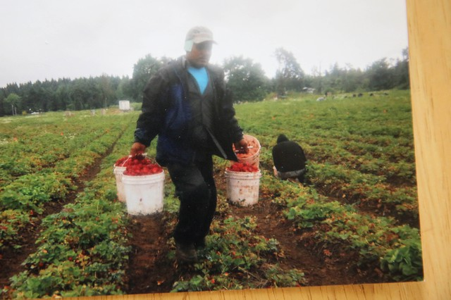 Roman Zaragoza-Sanchez picks strawberries in an undated family photo.