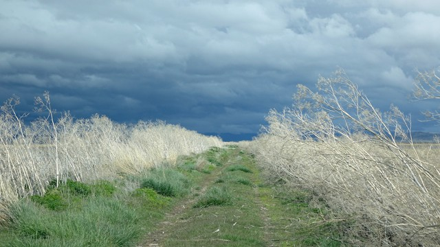 Weather moves fast over one of the wilder sections of Lower Klamath Wildlife Refuge.