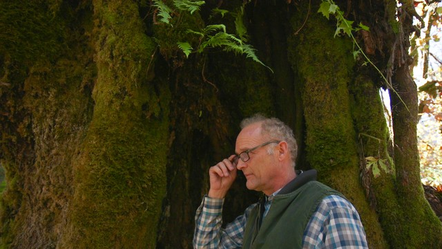 Steve McMinn runs Pacific Rim Tonewoods near Concrete, Wash. The company mills wood grown in the Pacific Northwest for guitarmakers.