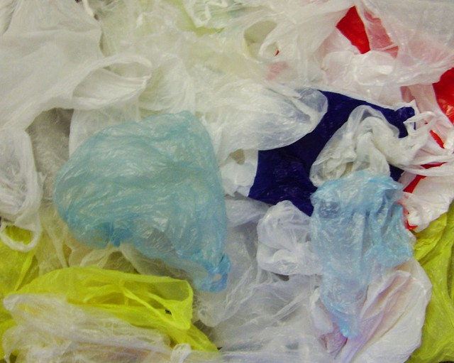 Seattle's  ban on single-use plastic bags makes it the latest - and largest - Northwest city to impose such restrictions.