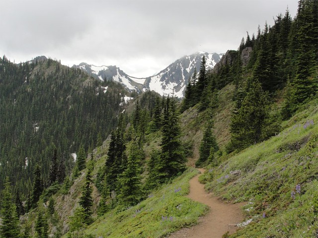 Mount Townsend Trail in the Olympic National Forest. Timber and environmental groups will try collaborating to boost both logging and habitat restoration in the forest.