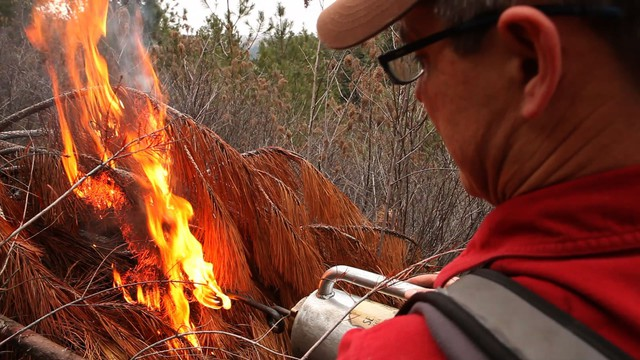 Reese Lolley, of The Nature Conservancy, burns a slash pile.