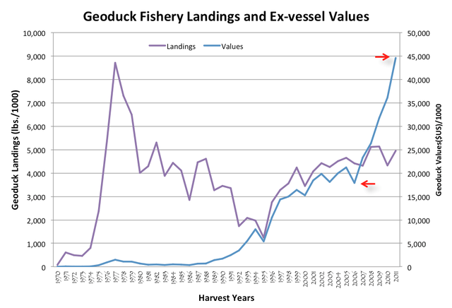 The total amount of geoduck catch reported by fishers (landings) has remained fairly steady since a 2.7 percent harvest rate was established in the 1980s. At the same time, the overall value of geoduck prices has risen dramatically.