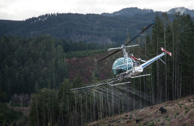 A helicopter sprays water over a recently logged slope owned by Starker Forests, near Philomath, Oregon, in a demonstration of how timber companies typically use herbicides on their tree farms.