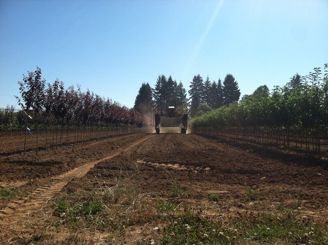 """Growers at the Hans Nelson Nursery in Boring spray water on rows of trees to compare the coverage offered by conventional pesticide sprayers with a new """"smart"""" pesticide sprayer."""