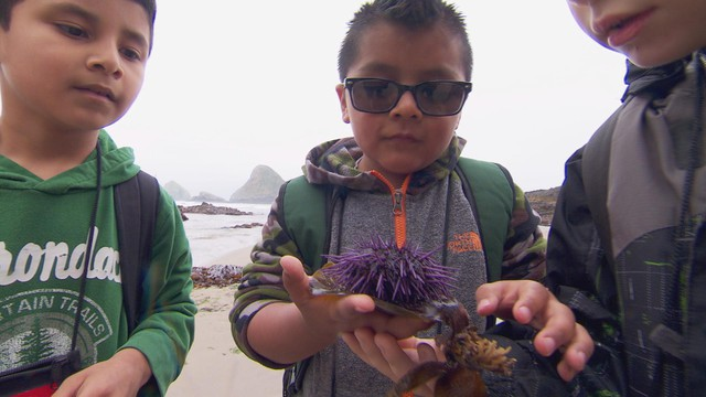 Boys find an urchin during Tillamook schools' second grade day at the bay.