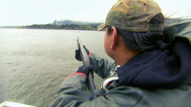 A Columbia River Inter-Tribal Fish Commission worker hazes sea lions with noise makers from a shotgun.