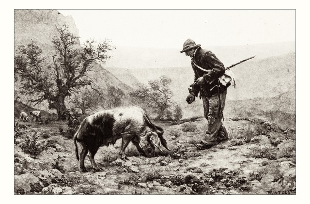 Female pigs were once the favorite partner of European truffle hunters.