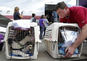 Alex Schuttpelz looks at a husky in a crate while unloading another dog from an airplane at McNary Field, in Salem, Oregon, on Saturday, Sept. 8, 2018.