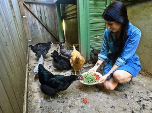 """Adventures in Chicken"" author Eva Kosmas Flores at her home on the Portland side of the Portland/Gresham border. Her chickens — each a different breed — are snacking on chopped tomatoes and broccoli."