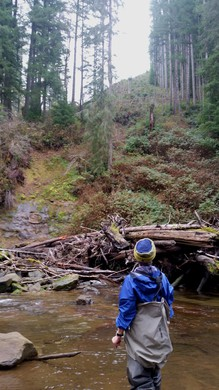 A landside is visible in front of a clearcut on the horizon.  Trees and branches from the slide have been snagged by wood added to the river by the Coos Watershed Association, creating salmon habitat.
