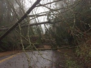 A landslide forced the closure of West Burnside Road in Portland Wednesday, March 15, 2017.