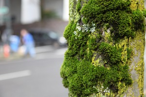 Measuring the contaminants stored in tree moss can help flag pollution hot spots.