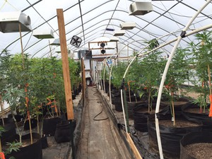 A greenhouse at Emerald Twist in Goldendale, Washington.