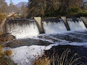 Threatened coho salmon jump up against the Wimer Dam.
