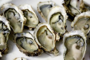 Mmm, oysters. Did you know that these mollusks clean the ocean beds they live on?