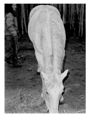 """Horse"" is one of the black and white photos Lowell has in Thomas's show."