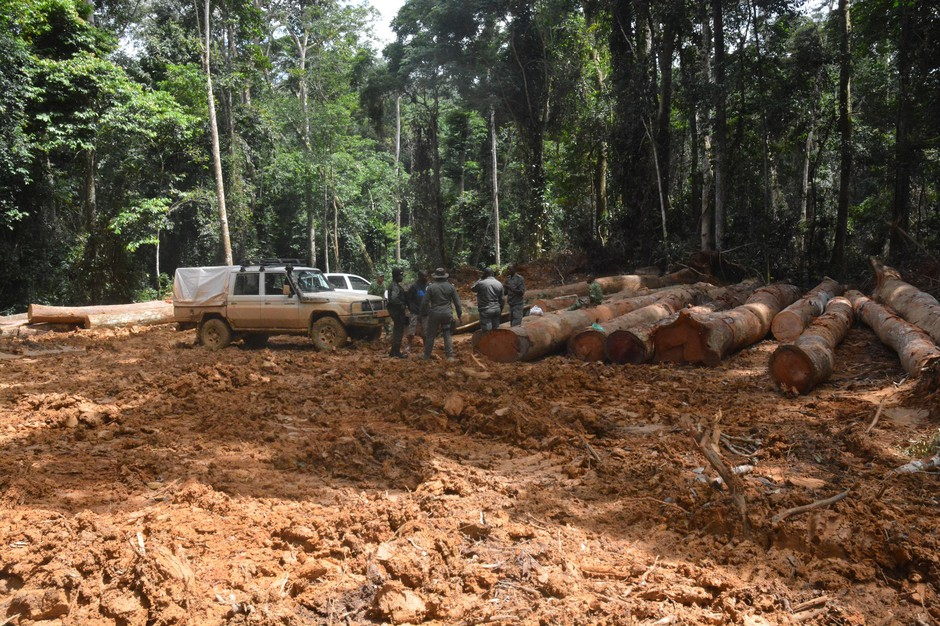A logging operation in a tropical rainforest of west Central Africa.