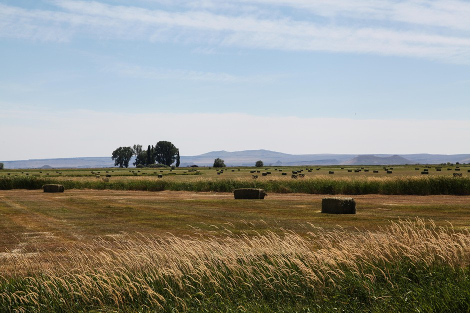 A view from the Malheur National Wildlife Refuge in Eastern Oregon.