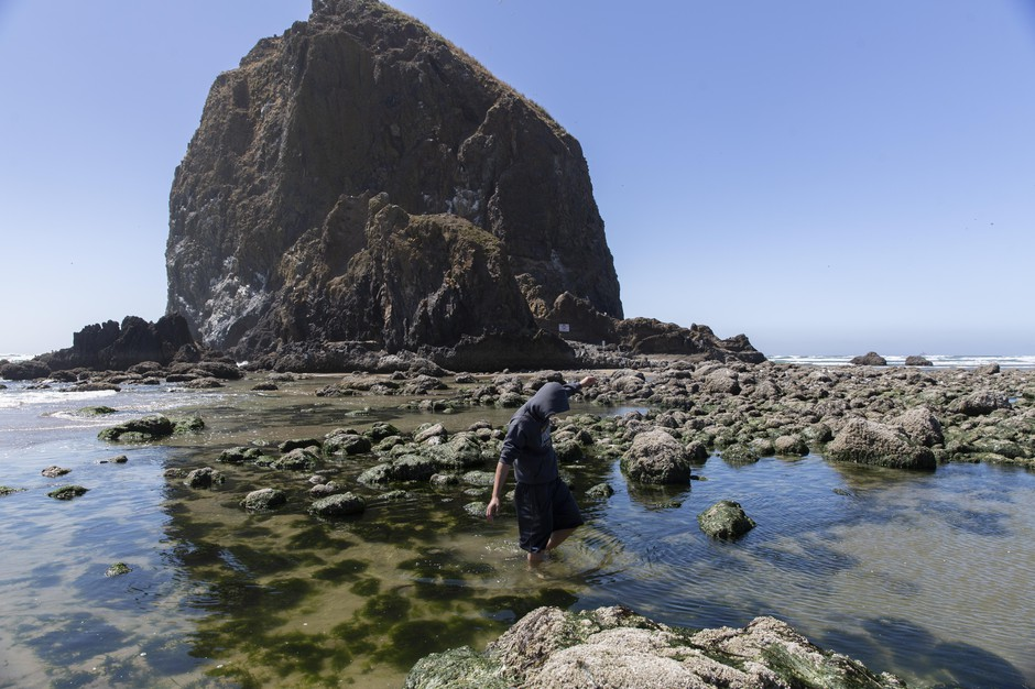 While shuffling through the tide pool in front of Haystack Rock in Cannon Beach, a young man spots a mole crab in the sand.