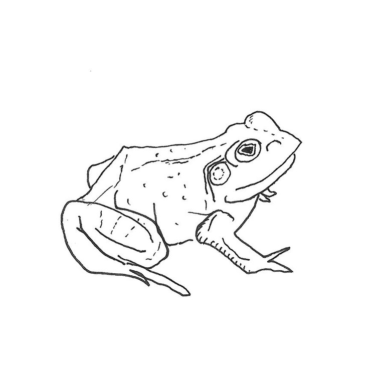 """""""Bull Frogs Croon (And Other Songs)"""" EP by Aoife O'Donovan"""
