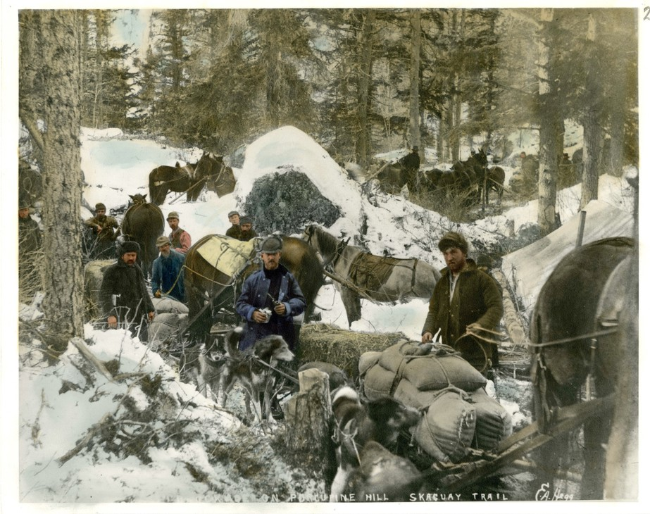 Sled dogs played a critical role in the Klondike Gold Rush in the 1800s.