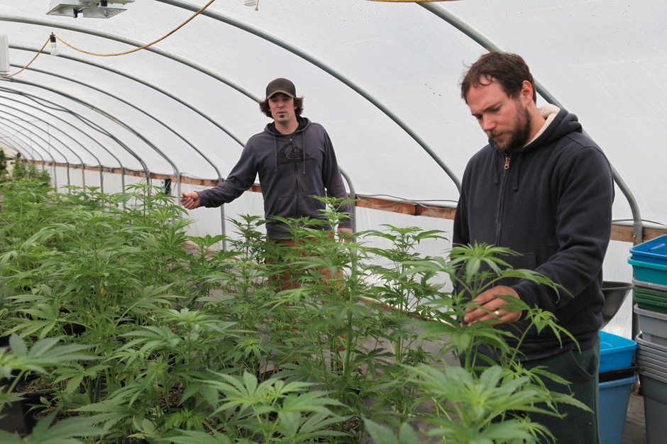 Seth Crawford and his brother run Oregon CBD in the hope of reinvigorating America's industrial hemp market.