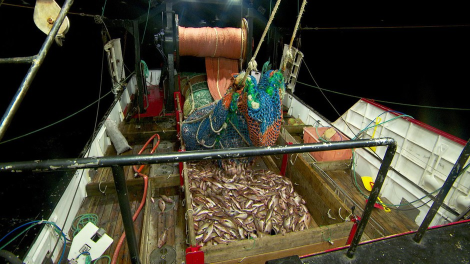 Fishing trawlers like the Winona J are able to catch more rockfish as populations rebound.