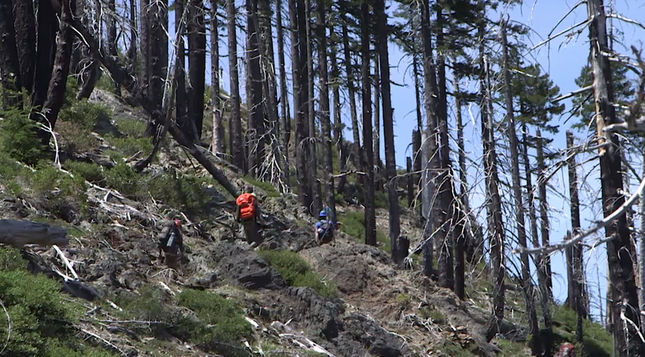 A volunteer trail crew for the Siskiyou Mountain Club hikes through the Kalmiopsis Wilderness.