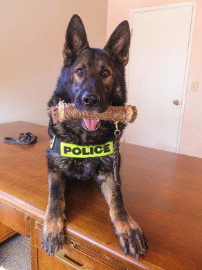 Bak, a drug detection dog, is facing early retirement. In an era of legal pot, he's overqualified.